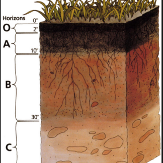Soil and Growing Medium